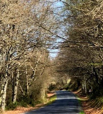 carretera LU-231